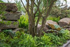 The Chatsworth Garden at the RHS Chelsea Flower Show 2015 -  designer Dan Pearson's passion for naturalism and the wilder side of gardening, the exhibit is inspired by Chatsworth's ornamental Trout Stream and Paxton's rockery.