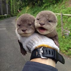 Two otters in the hand cost none in the bush :) http://ift.tt/1KsIzBc
