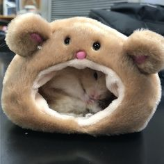 Thanks for helping Biscuit get to the front page yesterday! Cute Animal Memes, Cute Memes, Cute Funny Animals, Baby Animals Pictures, Cute Animal Pictures, Animals And Pets, Hamster Pics, Hamster Care, Baby Animals Super Cute