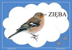 BLOG EDUKACYJNY DLA DZIECI Poland Map, Birds, Education, History, Blog, Winter, Animals, Geography, Therapy