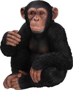 chimpanzé - Recherche Google