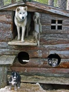 dog cabin. adorable. even though we don't have outdoor dogs...