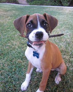 I like sticks!