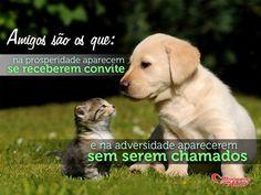 Amigos são os que: na prosperidade aparecem se recebem convite e na adversidade aparecem sem serem chamados.