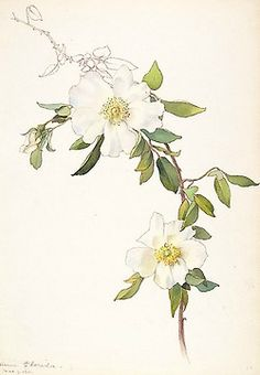 Heaveninawildflower: Archive