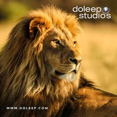 Contact Doleep Studios www.doleep.comcontact-2 Sales Team +971505096533 +971563914770 Sales sales@doleep.com Customer care care@doleep.com Find more information on any of our products or services visit www.doleep.com