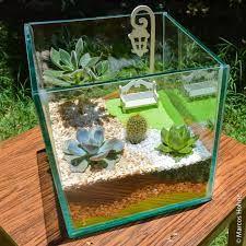 Resultado de imagem para como fazer um mini jardim com suculentas