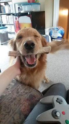 Este perro que se siente muuuy feliz por tener un hueso nuevo.