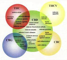 Lab Testing Medical Marijuana Cannabinoids Amp Terpenes