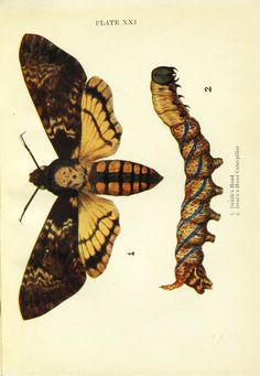 Butterflies and moths, - Biodiversity Heritage Library