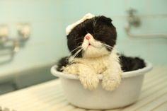 このぶさ可愛いネコは、まるおと名付けられている