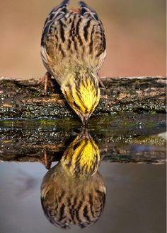 Reflection photography - bird