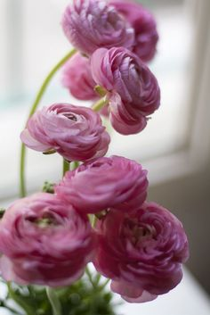 pink ranunculus for my Jenny