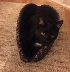 Charlie is enjoying his Cat Canoe® cat bed. The Cat Canoe is made by The Cat Ball, LLC.