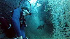 GoPro: 1 Million Fish - William Mitchell takes an enchanting dive into an infinite sea of Silversides in Grand Cayman.  Shot 100% on the HERO3+® camera from http://GoPro.com.