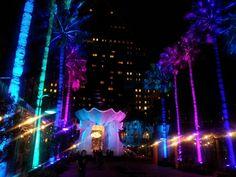 Disney Dolphin and Swan resorts Orlando Resorts, Disney Resorts, Swan And Dolphin Resort, Michael Graves, Disneyland Hotel, Never Grow Up, Walt Disney Company, Hollywood Studios, Epcot