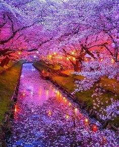 We are taking about the most beautiful places in which Japan is also counted. This place is more like Heaven and have a attractive look.S tourist visit japan in the spring and winter. The cherry blossom is grown everywhere in the spring. We hop Beautiful Places To Travel, Wonderful Places, Cool Places To Visit, Beautiful World, Places To Go, Japan Places To Visit, Heavenly Places, Romantic Travel, Beautiful Things