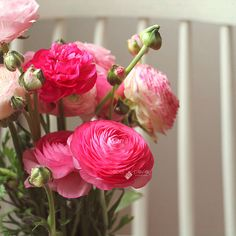 Ranunculus again :) by Isabel Pavía, via Flickr