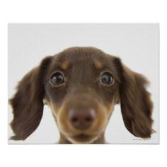 Wiener Dog Art, Posters, & Framed Artwork | Zazzle