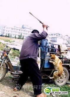 Image detail for -jiangmen-dog-culling-08.jpg