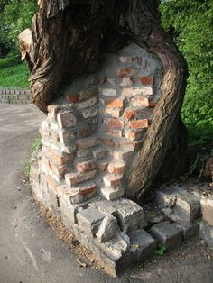 22 Trees Growing Around Objects ~ Now That's Nifty