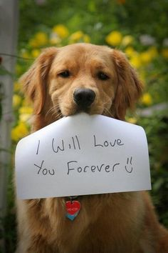 I will love you forever. =) Dogs are such loyal pets.