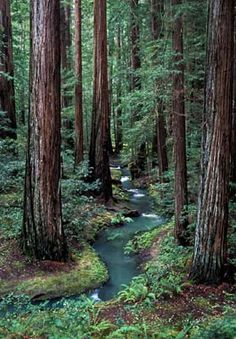 Montgomery Woods State Reserve-this is my favorite place. I just imagine the sounds, sights and smells and I am home