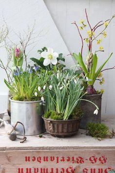 Great spring arrangement