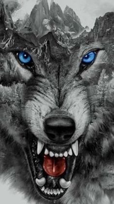 Traditional wolf tattoo design is part of American Traditional Wolf Tattoo Ideas - wolf growling Snarling Wolf Large Closeup Bares Fangs Image From Tinypic Com Tags Artwork Lobo, Wolf Artwork, Wolf Tattoo Design, Wolf Design, Design Design, Wolf Tattoos Men, Dog Tattoos, Wolf Photos, Wolf Pictures