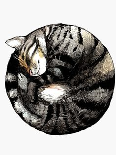 'Tranquil Cat Sleeps in a Circle' Sticker by JCPhillipps Cat Drawing, Painting & Drawing, Cat Sketch, Illustration Art, Illustrations, Guache, Cat Sleeping, Art Graphique, Cat Tattoo