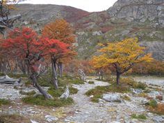 Parc les Glaciers Mountains, Nature, Painting, Travel, Art, Art Background, Viajes, Painting Art, Traveling