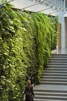Bedrijf werkzaam in Amsterdam. Verticale tuinen vergroenen verstedelijkte gebieden | Green Fortune