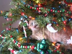 christmas pictures of animals | Animals in Christmas Trees (funny pics)