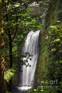 A view of the most incredible waterfall in Portland: Multnomah Falls with some of the lush greenery Oregon is famous for. Click to purchase a print.