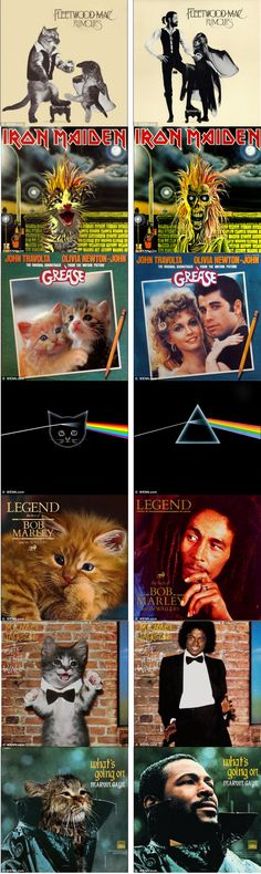 Something from the back cat-alogue! Classic album covers recreated using kittens