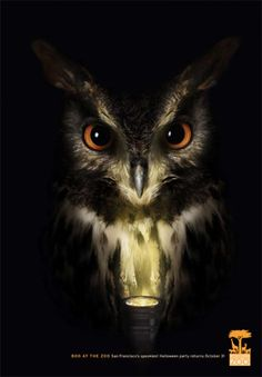 scary owl pictures
