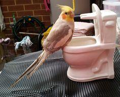 ' POOKIE ' ... Toilet Training .......lol...