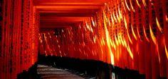 """El principal santuario sintoísta dedicado al espíritu de Inari, la patrona de los negocios, es el Fushimi Inari-Taisha.  Es especialmente conocido por los miles de """"toriis"""" rojos que delimitan el camino al santuario nipón. Los """"torii"""" son donaciones en honor a Inari.  ¡No dejes de viajar!"""