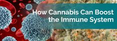 How Cannabis Can Boost the Immune System