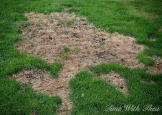 garden care yards totally repair dead grass spots damaged by dog urine in 3 easy steps, lawn care, pets, pets animals Lawn Repair, Growing Grass, Lawn Care Tips, Dog Urine, Lush Lawn, Dog Pee, Lawn And Garden, Garden Tips, Garden Care