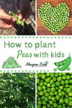 Planting Peas with Kids Kids Learning Activities, Spring Activities, Teaching Ideas, Growing Peas, Diy Garden Projects, Garden Ideas, Garden Inspiration, Outdoor Learning, Outdoor Activities