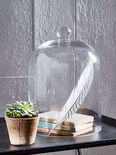 It might be rare to see the original oversized French garden cloches protecting delicate winter greens in the outdoor garden, but glass cloches still have their place on mantelpieces and bookshelves inside. Glass Dome Display, Glass Domes, Glass Vase, Glass Bell Jar, The Bell Jar, Home Decor Accessories, Decorative Accessories, Garden Cloche, Cloche Decor