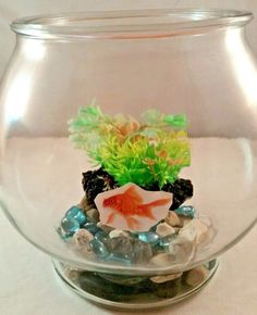 One Gallon Glass Fish Bowl with accessories
