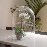 49cm high, 40cm wide rectangular glass dome cloche is one of a range of our centrepiece cloches for hire in Melbourne, Australia https://www.myweddingdecor.com.au/products/49cm-glass-dome-cloche-wedding-display-melbourne-hire