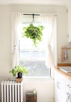 ツル科の植物はぜひ、天井から吊るすと華やかになります。部屋の印象を変えたいときは、置く位置の高さを変えてみましょう。