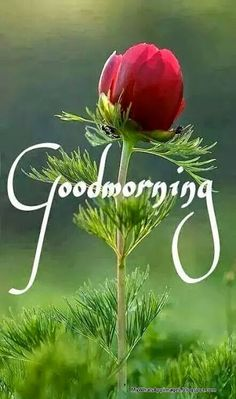Good Morning Wording Images Images Having Word Good Morning Good Morning Photos Images Saying Good Morning Images having word Good Morni. Good Morning Sunday Wallpaper, Morning Words, Good Morning Happy Sunday, Good Morning Roses, Good Morning Friends, Goog Morning, Morning Morning, Morning Post, Good Morning Beautiful Images
