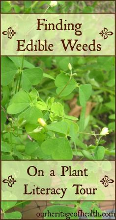 Edible weeds and plant literacy |Our Heritage of Health #MedicinalPlants #TraditionalChineseMedicine