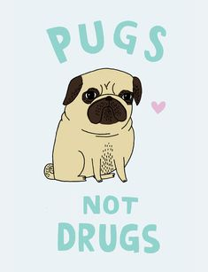 Pugs not Drugs - I remember Russell Howard having this on a t-shirt :)