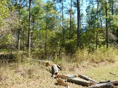 86 S. PIne Harbour, Coldsping Interior Lot Cape Royale