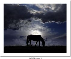 """""""Lonely horse pasturing on the field in the nighttime"""" - Art Print from FreeArt.com"""